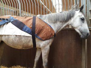 BEMER-VET Pferde – physikalische Gefäßtherapie BEMER