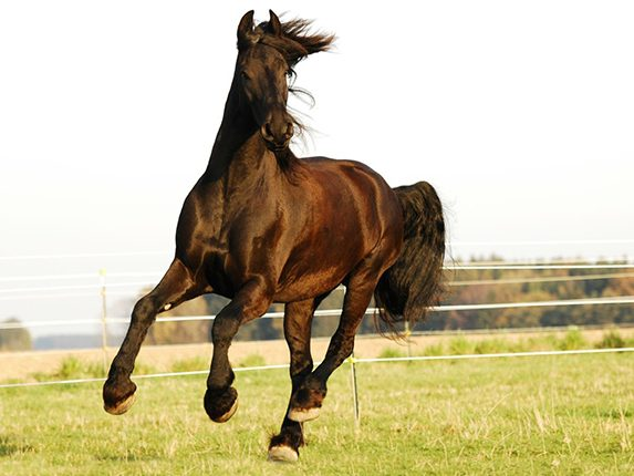 Pferdetraining, Balanced-Horse-Konzept, Hannah Beate König