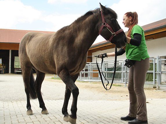 Bodenarbeit: Balanced-Horse-Konzept, Hannah Beate König
